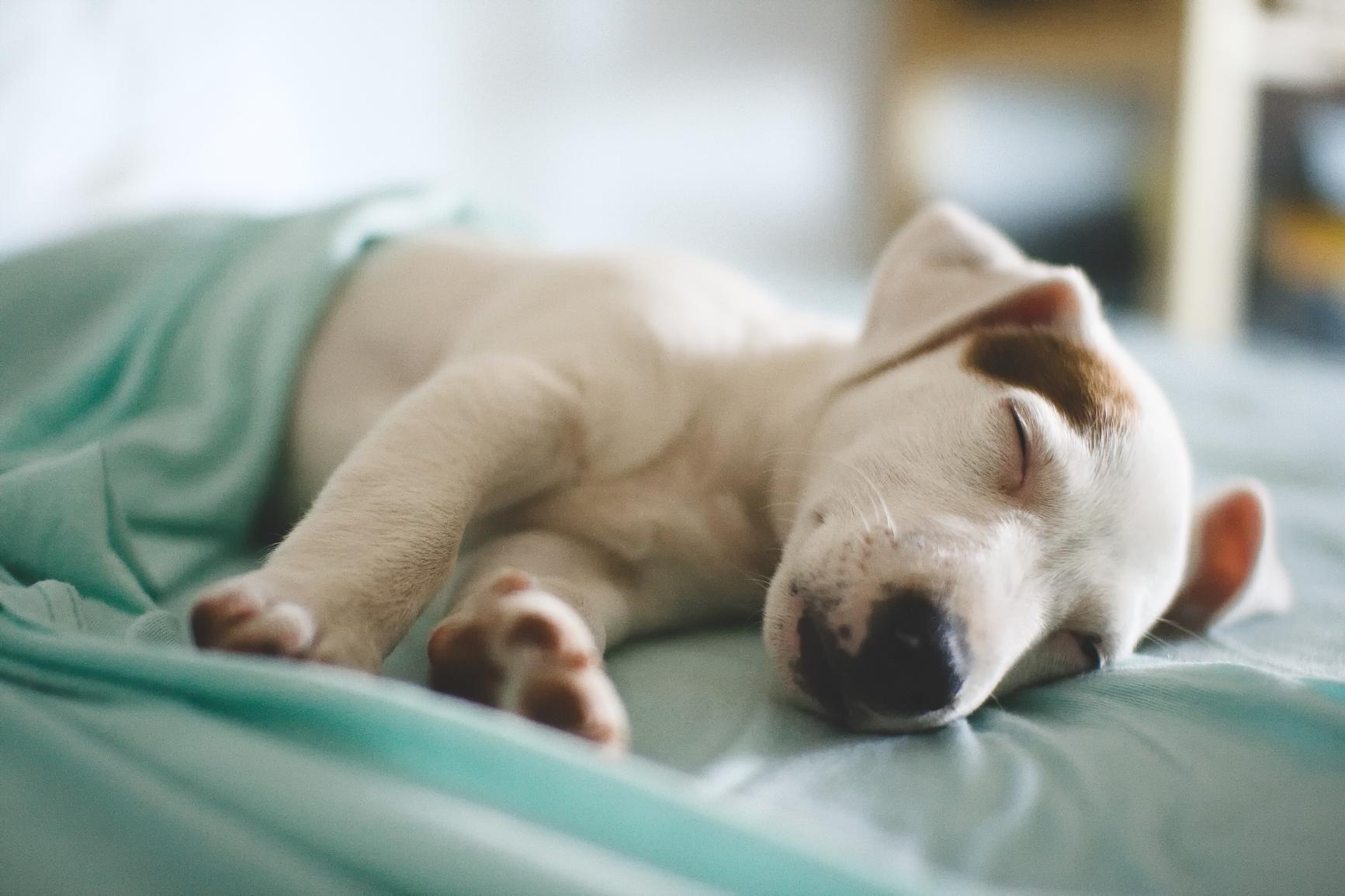 Yorkville, Dog Daycare, Grooming, Groom, Tire Biter, Playcare, Dog Walking, Kennel Free, Boarding, Toronto