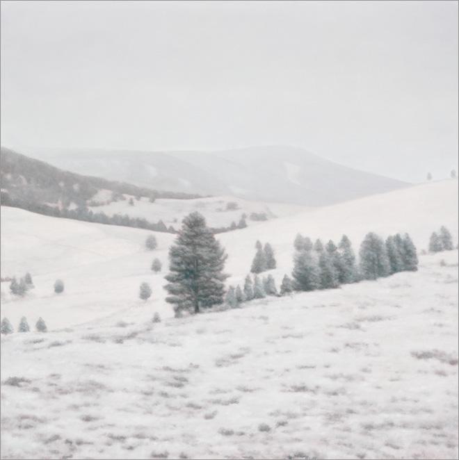 "October Snowfall, Yellowstone  20 x 20""  oil on panel  2010"