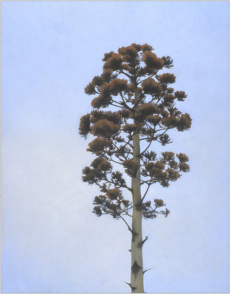 "Flowering Agave  30 x 24""  oil on canvas  2004"