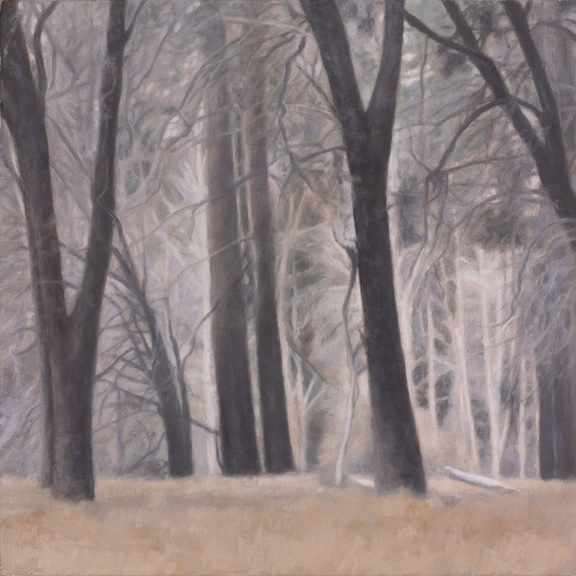 "Black Oaks Study 10 x 10"" oil on linen 2012"