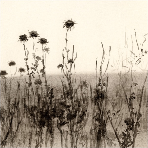 "Thistles, Hollister Ranch #1 5x5"" ink on paper 2009"