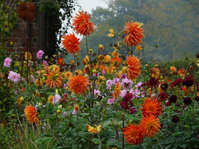 doddington cutting garden 1email.jpg