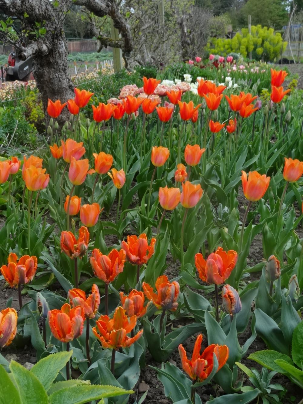 April flowers 15 029.jpg