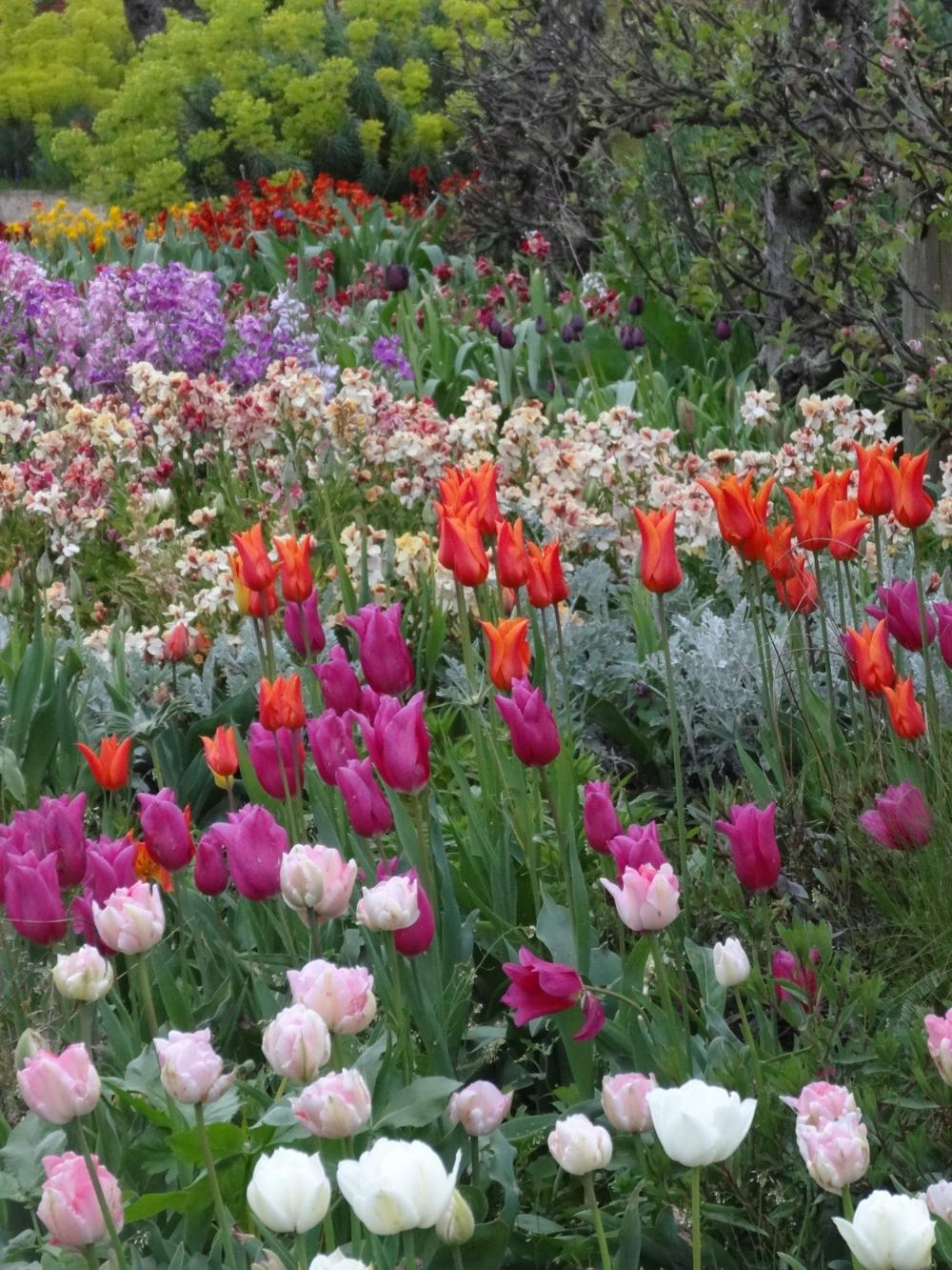 April flowers 14 203.jpg