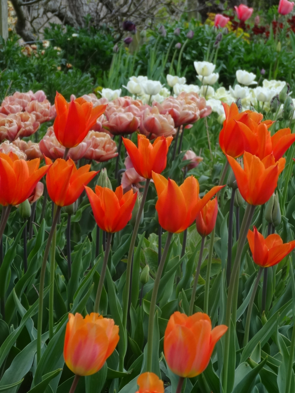 April flowers 15 031.jpg