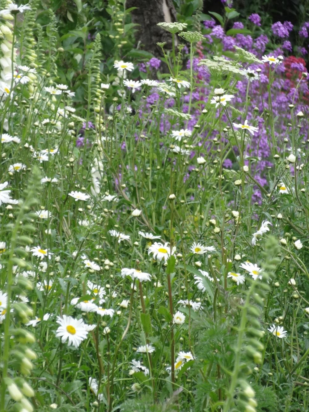 May flowers 14 190.jpg