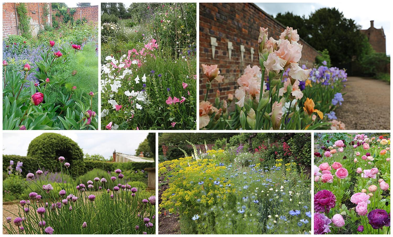 Rachel Petheram cutting garden English cottage garden flowers, cutting garden Lincolnshire