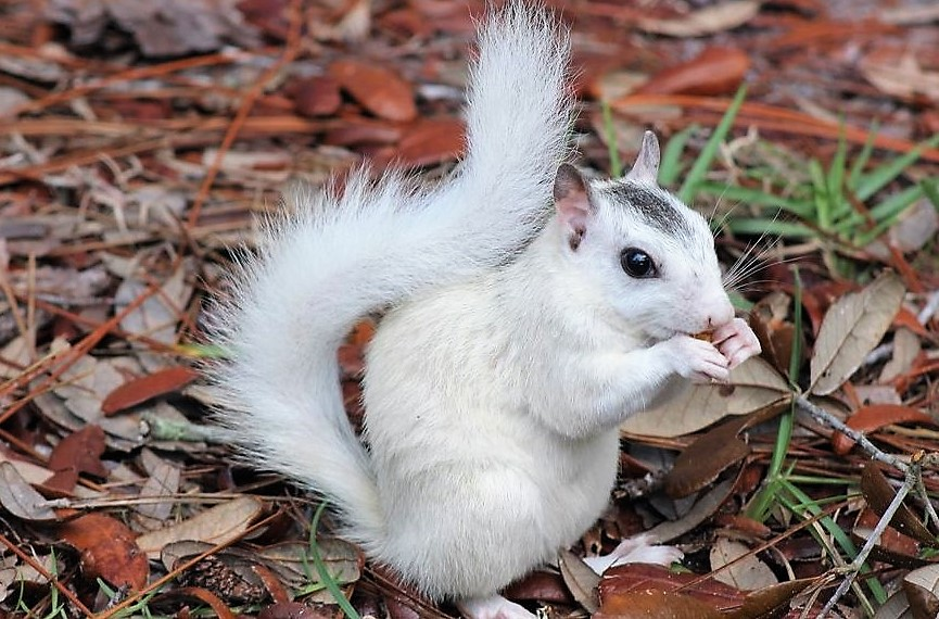 White Squirrel .jpg
