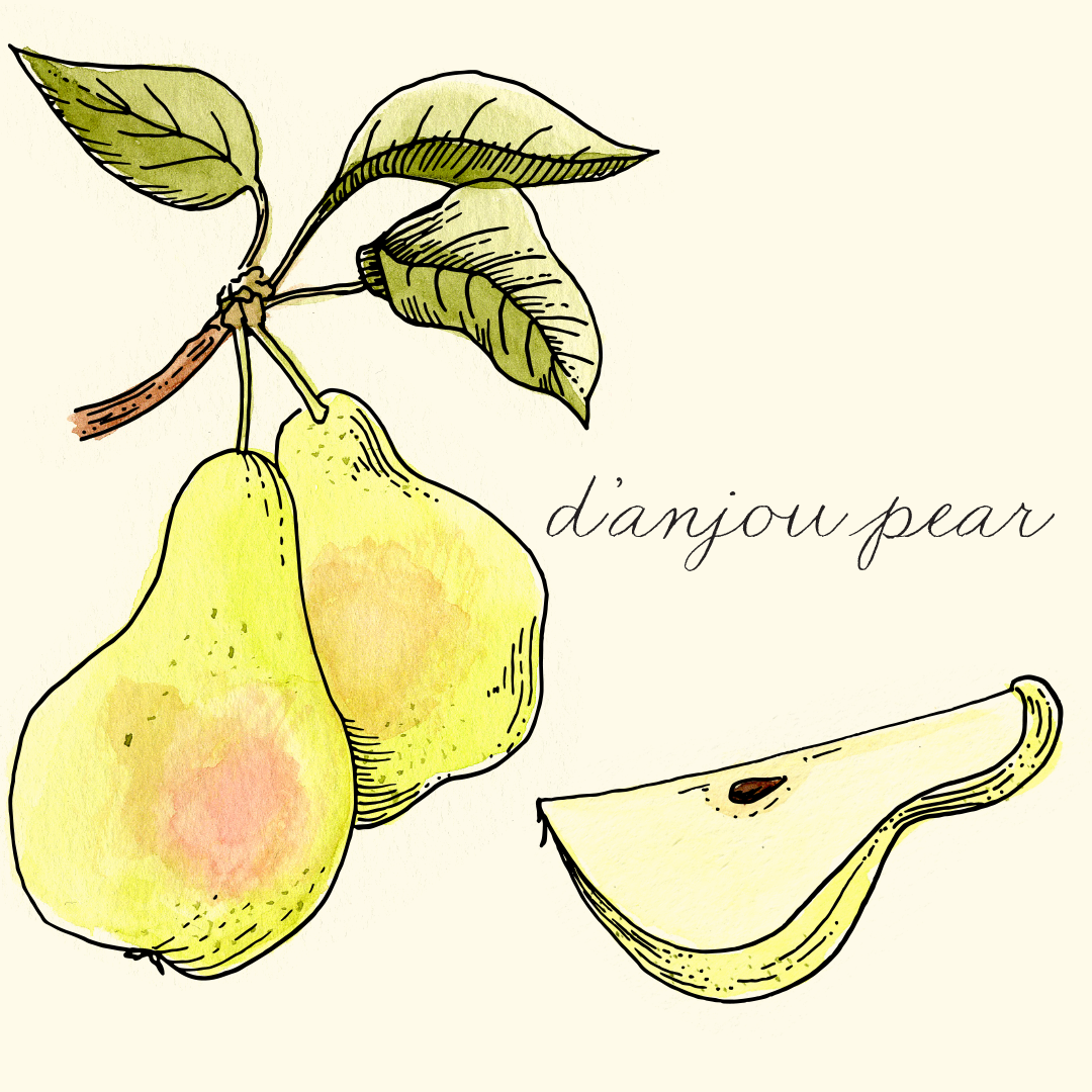 danjou_pear.png