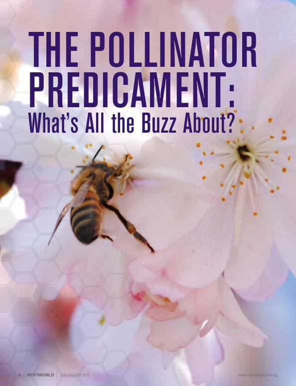 Bees_pg2.jpg