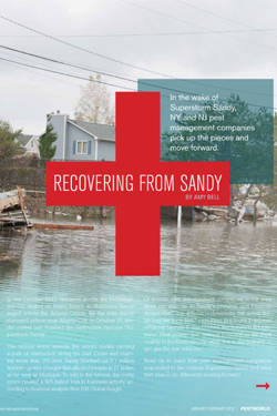 freelance-copywriter-Hurricane-Sandy-Pestworld-magazine-writepunch.jpg