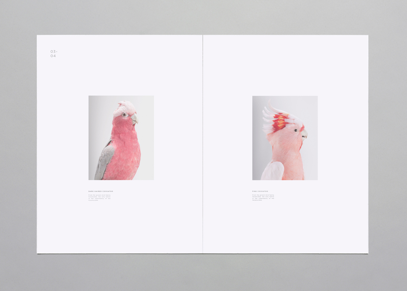 Birds-Spread-3.jpeg