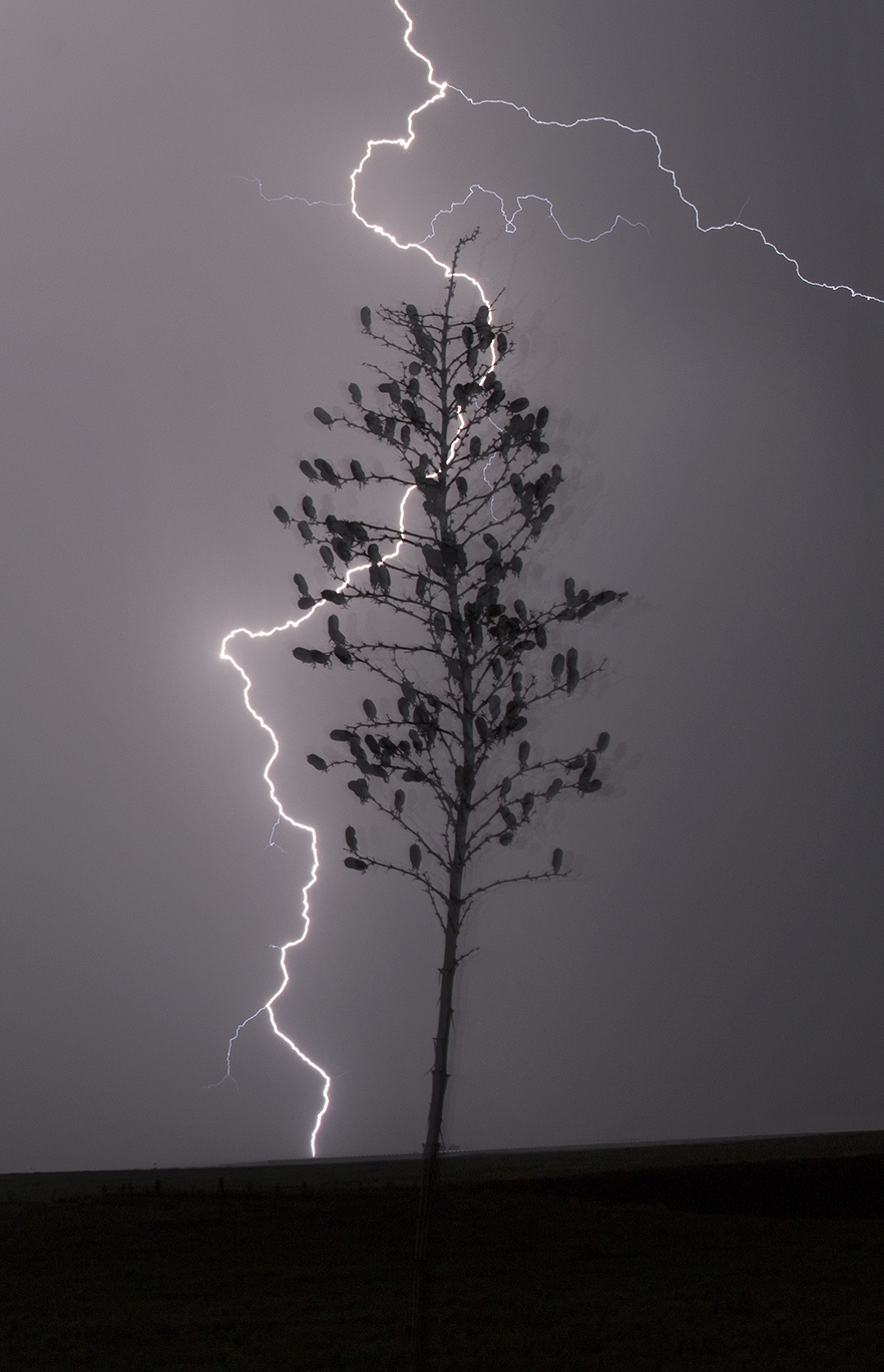 Electric Yucca
