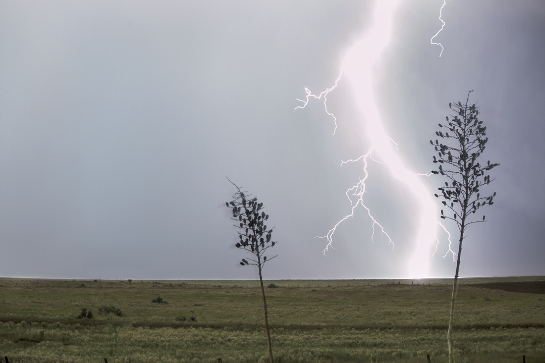 Lightning with Yuccas