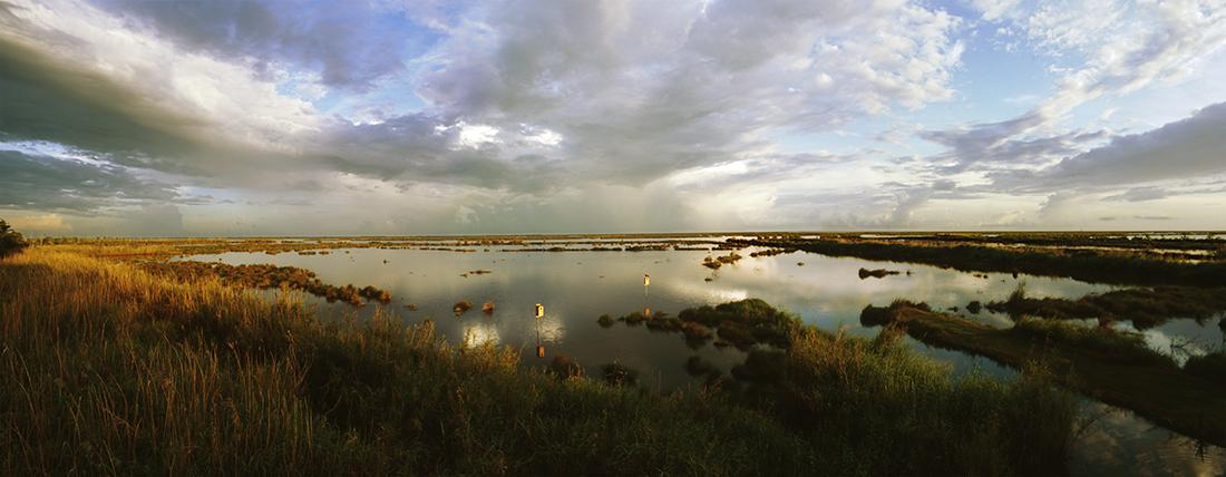 Pecan Island Marsh