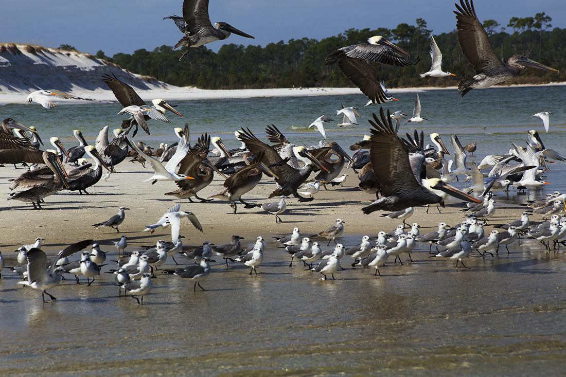 One Hundred and Thirteen Birds