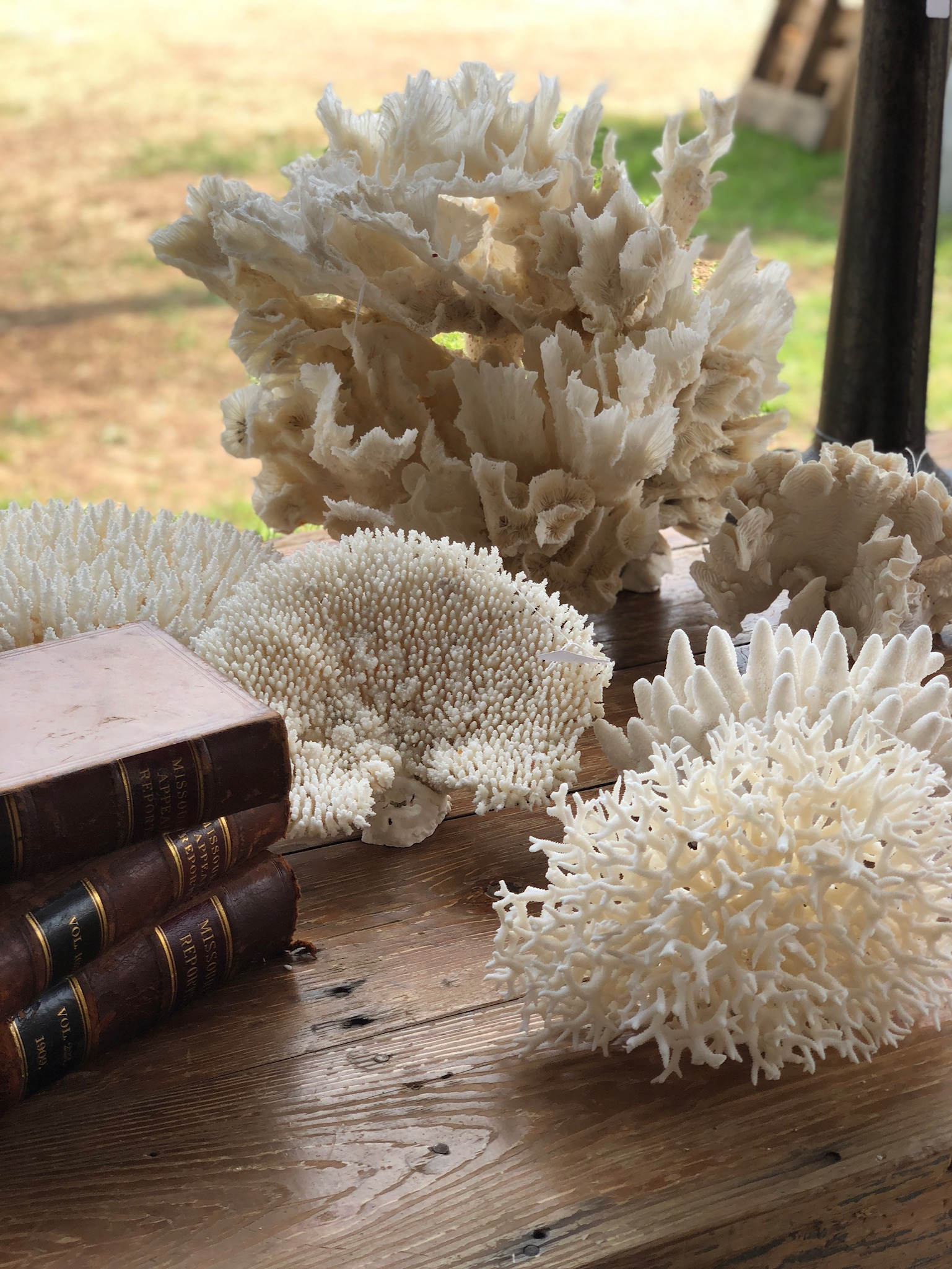 Gorgeous Corals and Leather Bound Books