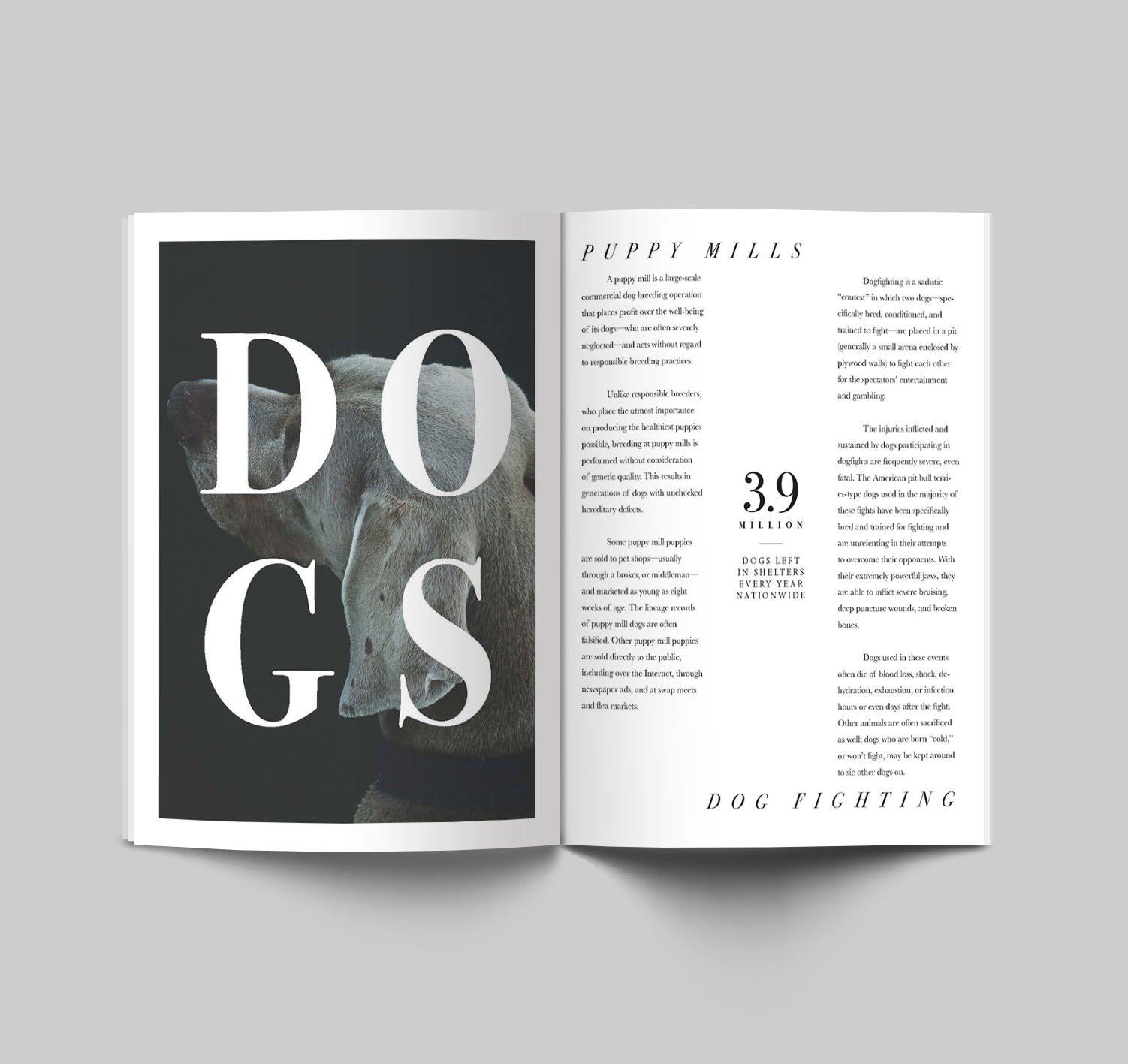 canine spread 3.jpg