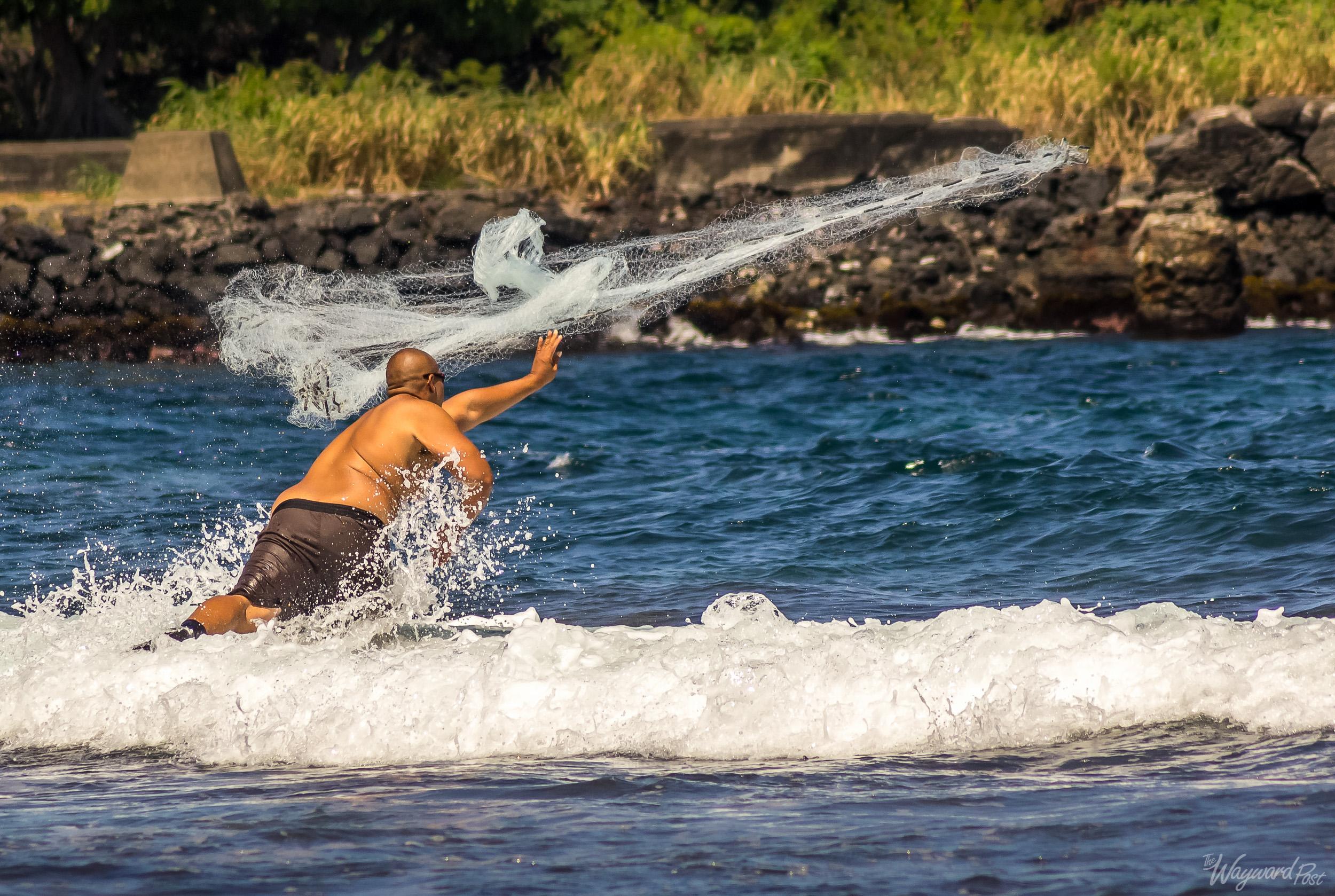 "A Hawaiian native cast-net fishing on the island of Hawaii, sometimes called ""The Big Island."""