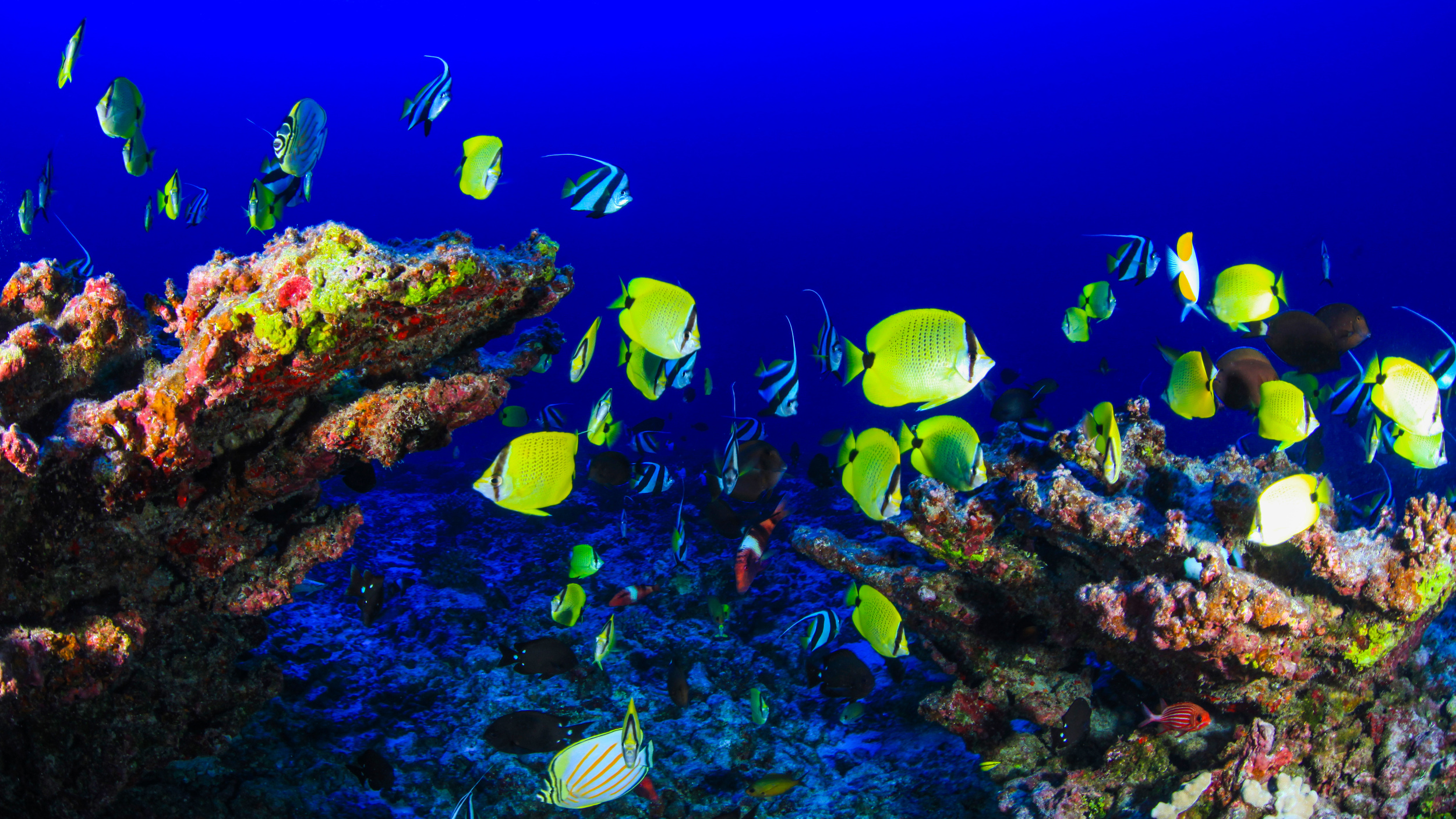 Coral, Reef, Underwater, Fish, The Wayward Post