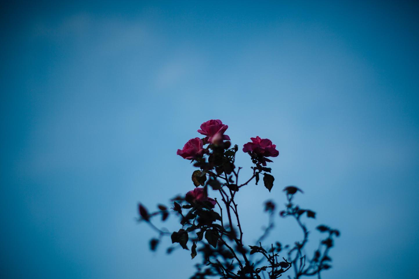 Rose Garden in winter.