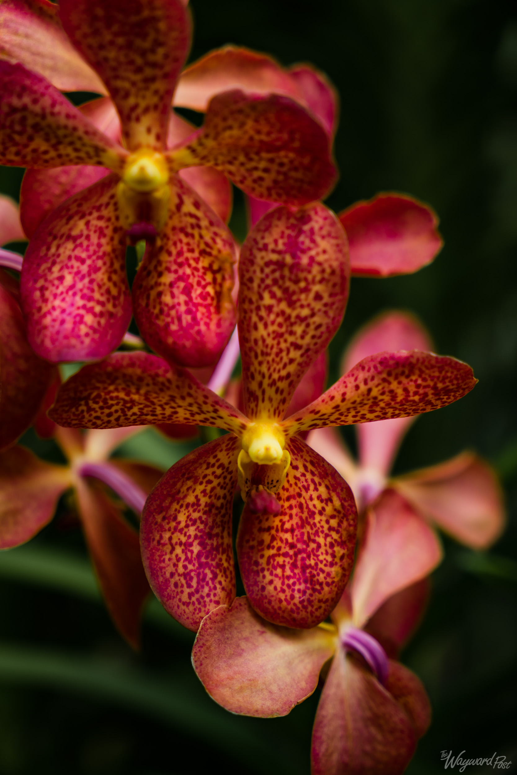 The Wayward Post - Photo Story - Singapore and Orchids-5.jpg