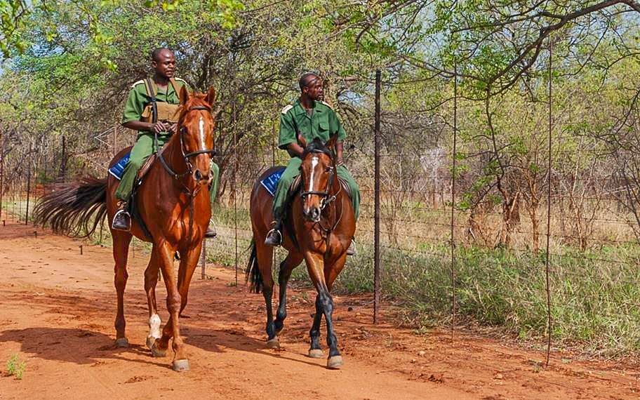 Rhino Revolution 2 horses with grooms.jpg