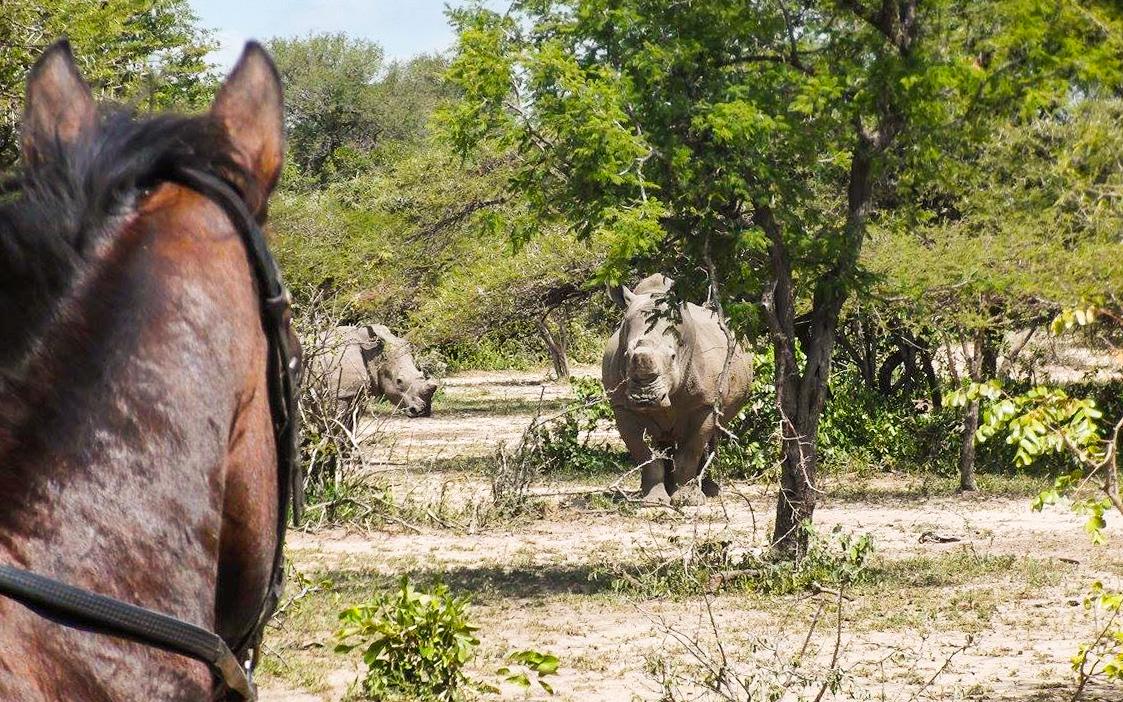 Rhino Revolution - rhino sighting horseback a.kehoe.jpg