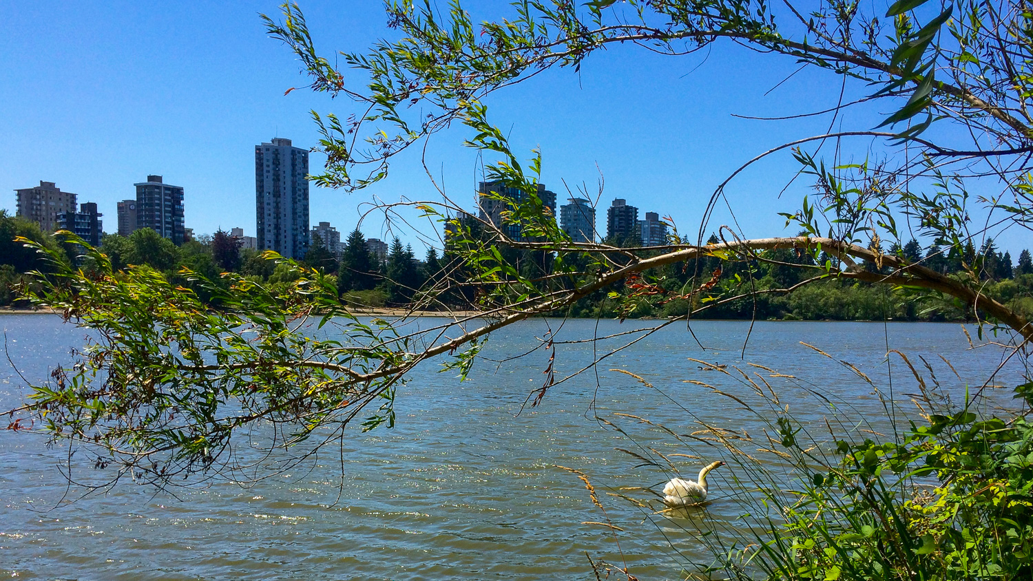 From Lost Lagoon in Stanly Park you can see swans and skyscrapers. Photo by Johanna Read TravelEater.net-Wayward Weekend Vancouver-10.jpg