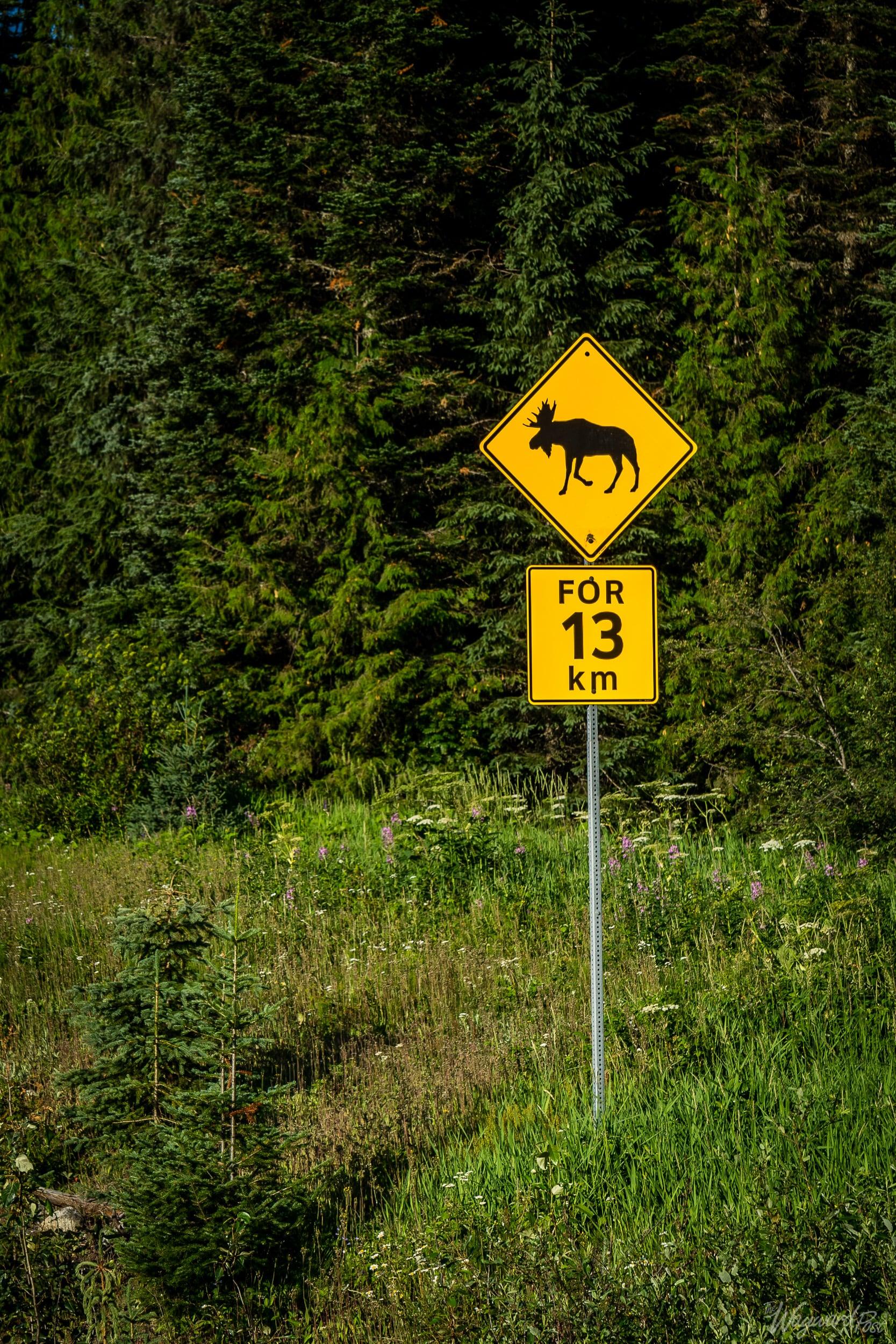 Moose Warning Sign - The Wayward Post - Photo Story - Jasper National Park, AB Canada