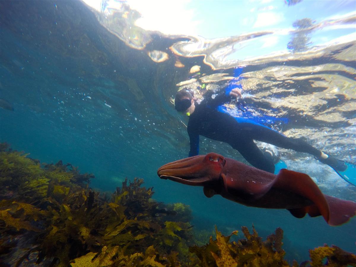 EcoTreasure Tours Sydney Snorkeling Tours. Photo from Ecotreasures.com.au.