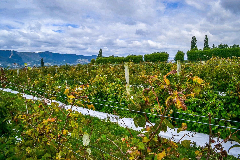Cycling New Zealand's Great Taste Trail - Julia Reynolds - The Wayward Post (1 of 5).jpg