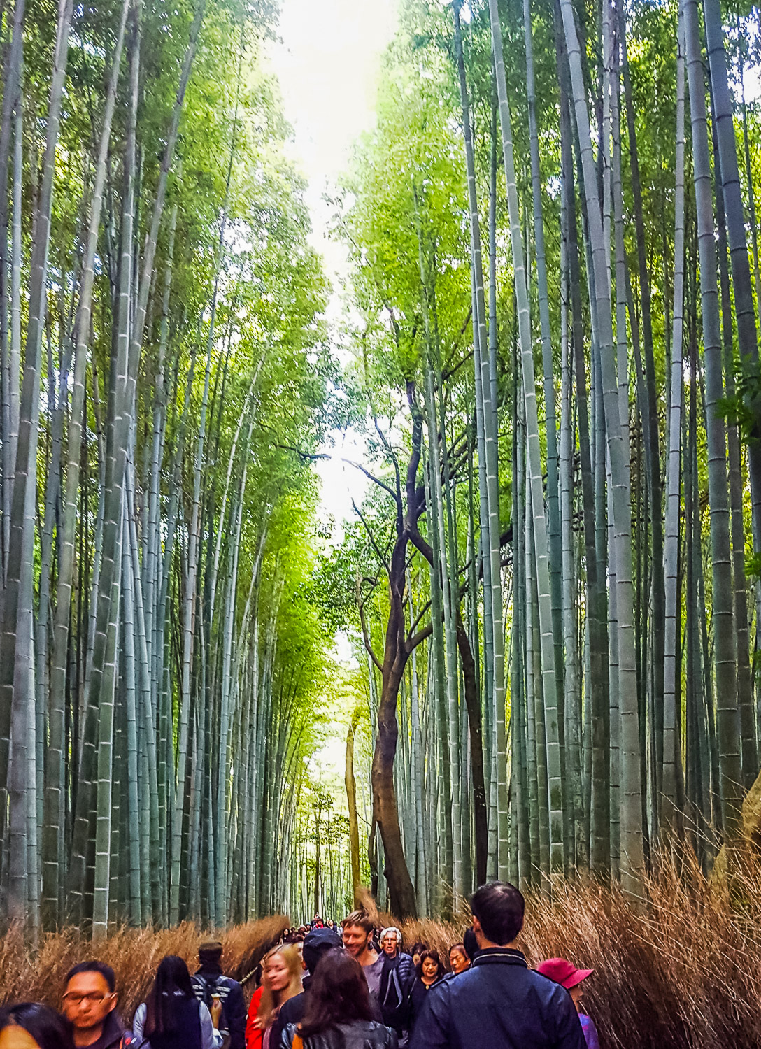 Arashiyama district and bamboo forest - Why You Should Experience Kyoto by Bicycle - The Wayward Post
