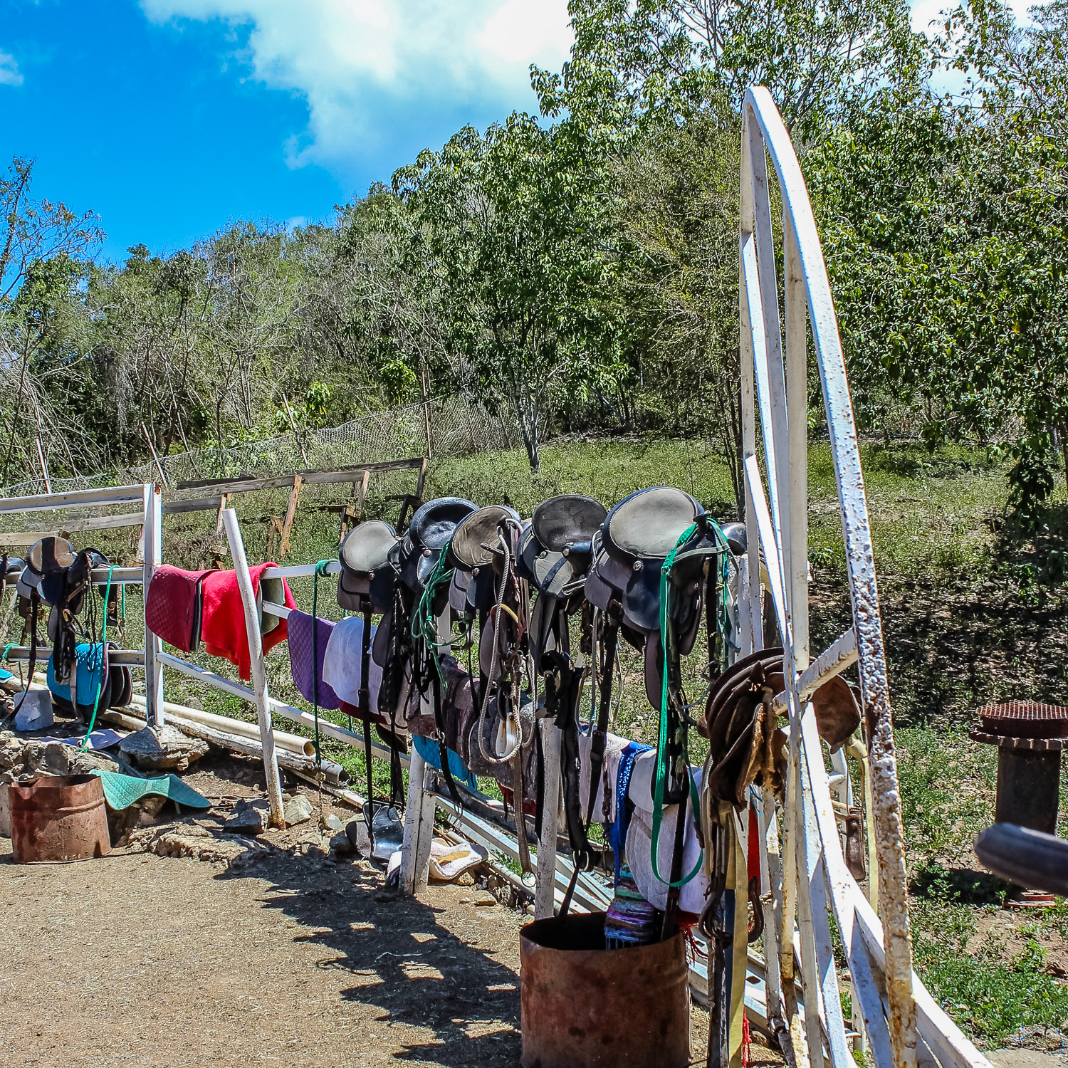 saddles at Golden Age Ranch - Responsible Travel in the Virgin Islands-4.jpg