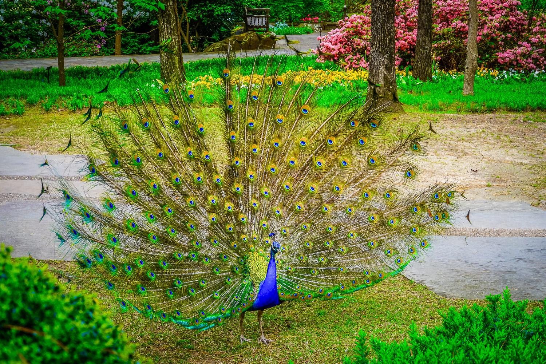Showing off at Garvan Gardens. Photo by Johanna Read TravelEater.net - Wayward Weekend - 18.jpg