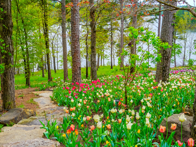 Spring tulips Garvan Gardens. Photo by Johanna Read TravelEater.net - Wayward Weekend - 20.jpg