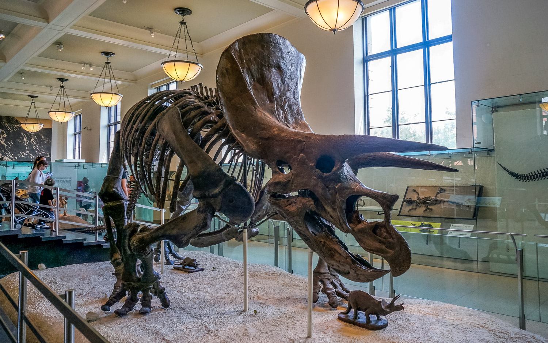 Natural History Museum - The Wayward Post, Weekend in Brooklyn NYC