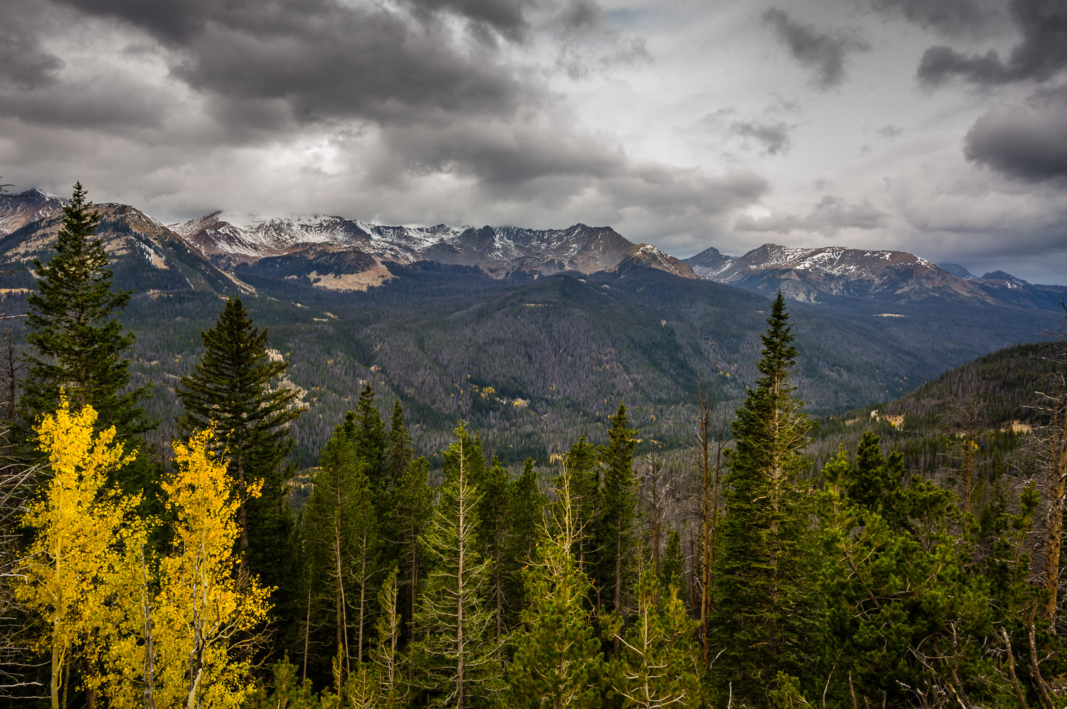 Alpine View in Rocky Mountain National Park