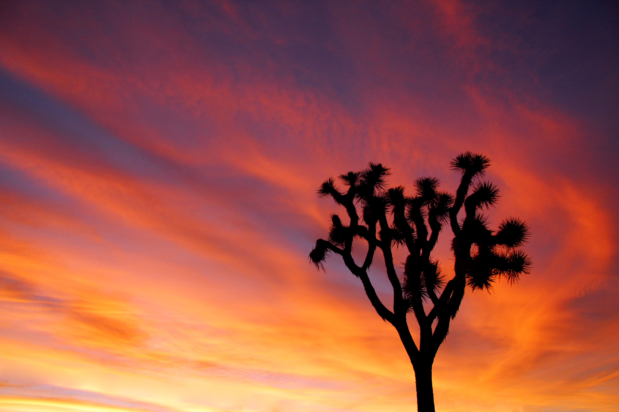 Joshua Tree Sunset - Photo Credit: NPS-Brad Sutton