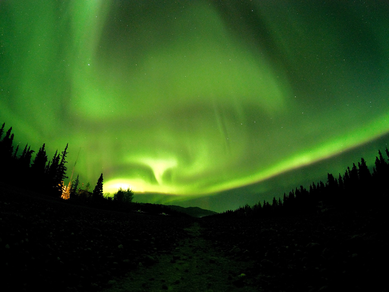 Northern Lights in Denali National Park. Photo Credit: Jamon Rice