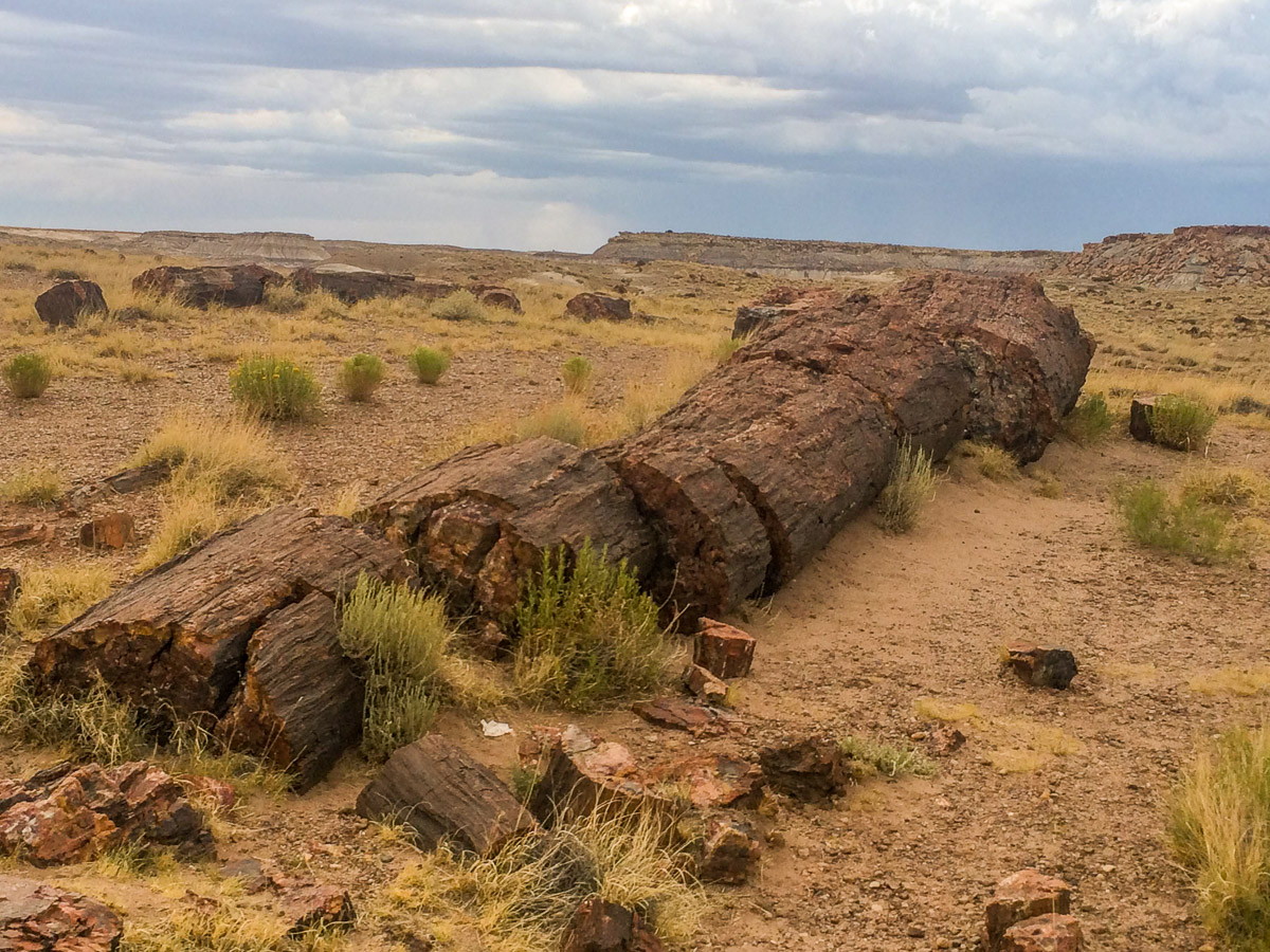 Petrified 2 - Wayward Tour Through National Parks in the Southwest.jpg