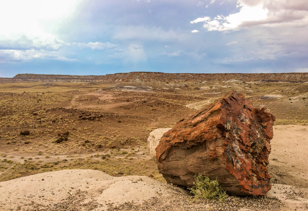 Petrified 4 - Wayward Tour Through National Parks in the Southwest.jpg