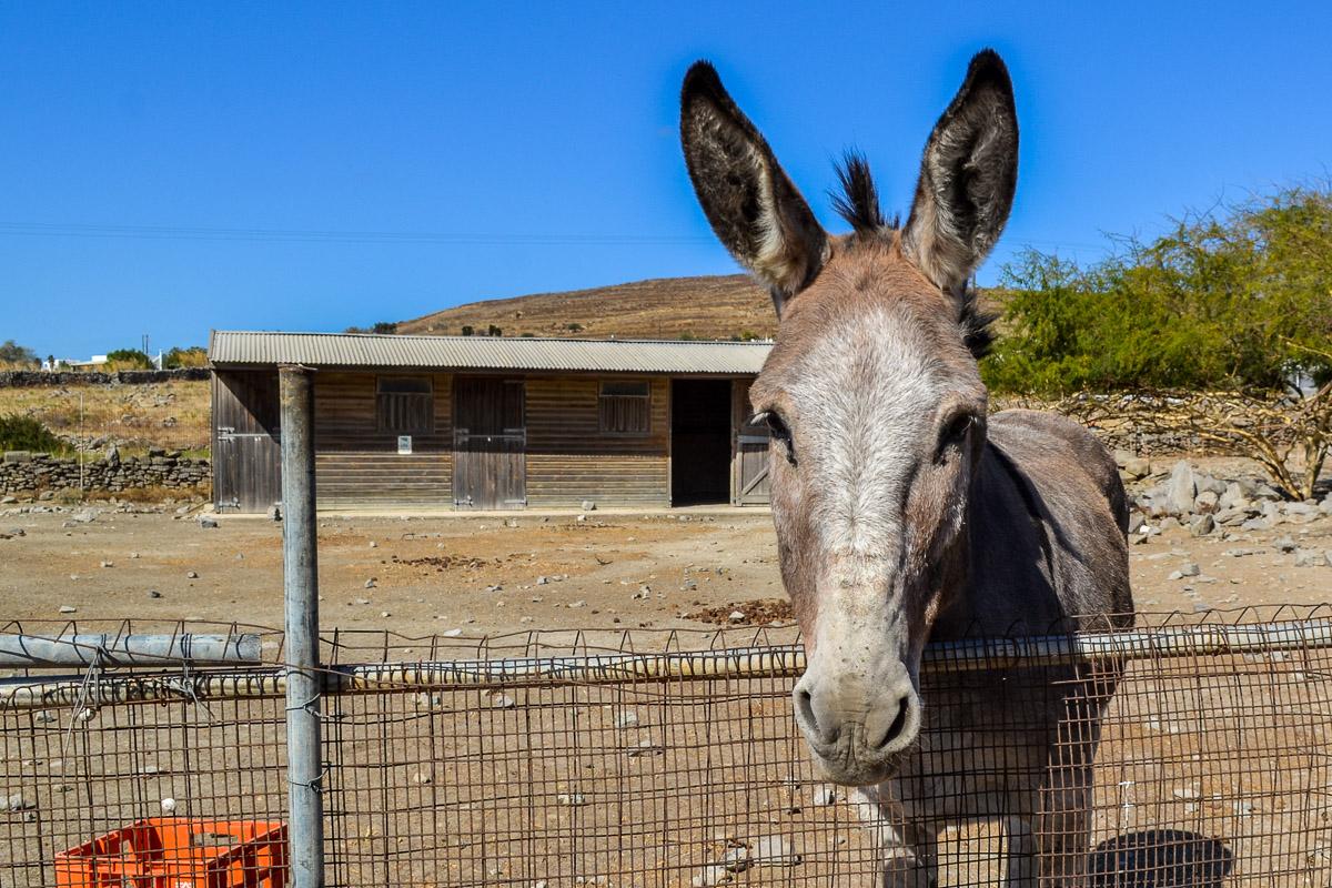 Donkey.Photo by Nadja Sayej