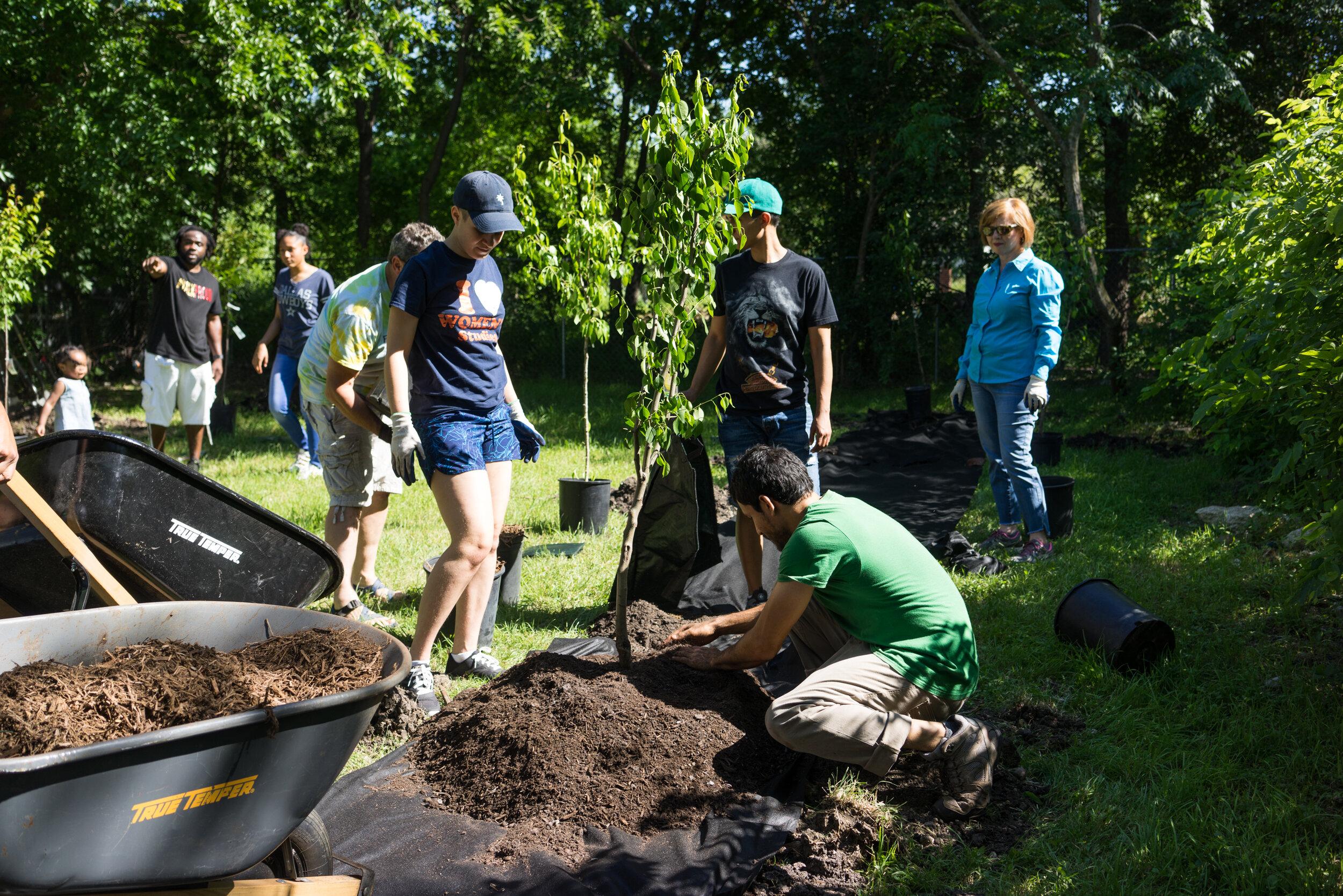 Garden Volunteer Program @ Eastside Community Orchard