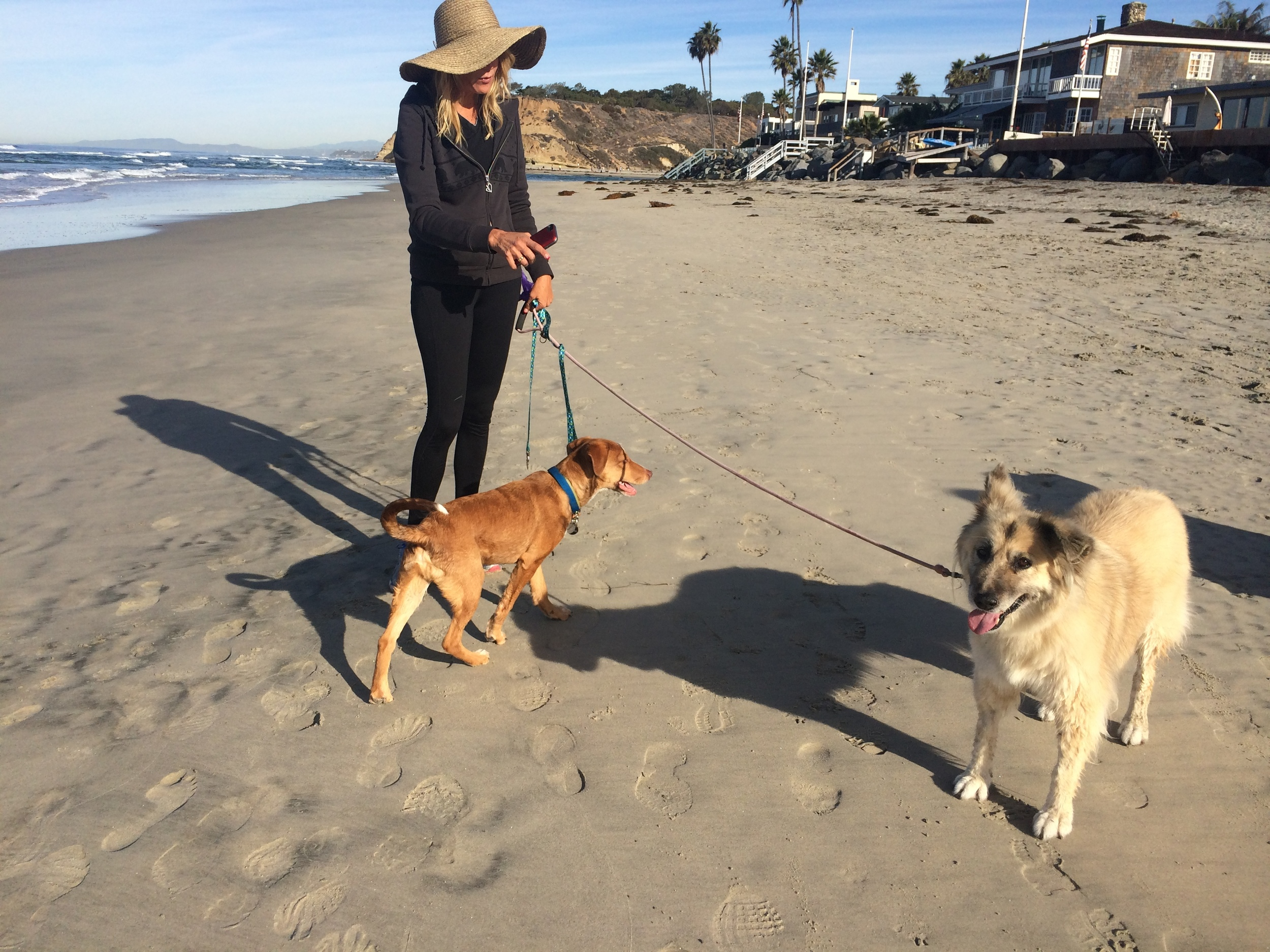 two dogs del mar tric 2.JPG