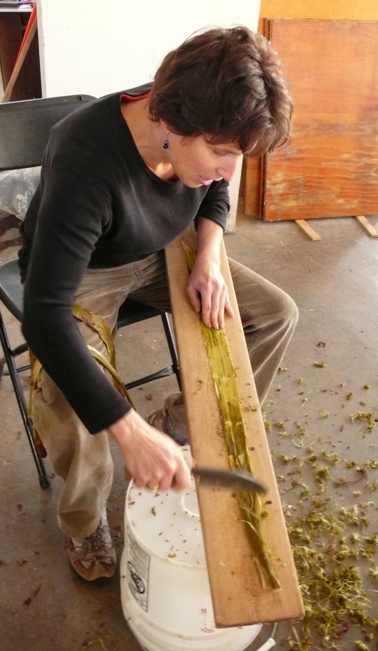 scraping bark