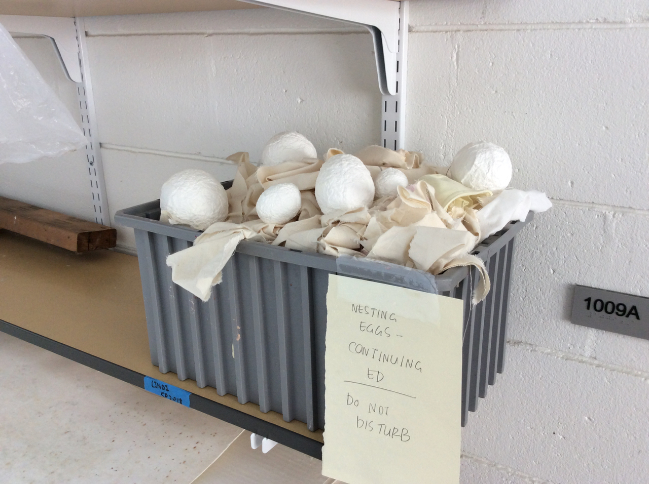 Julia Dauer's cast eggs, Cont Ed 2018