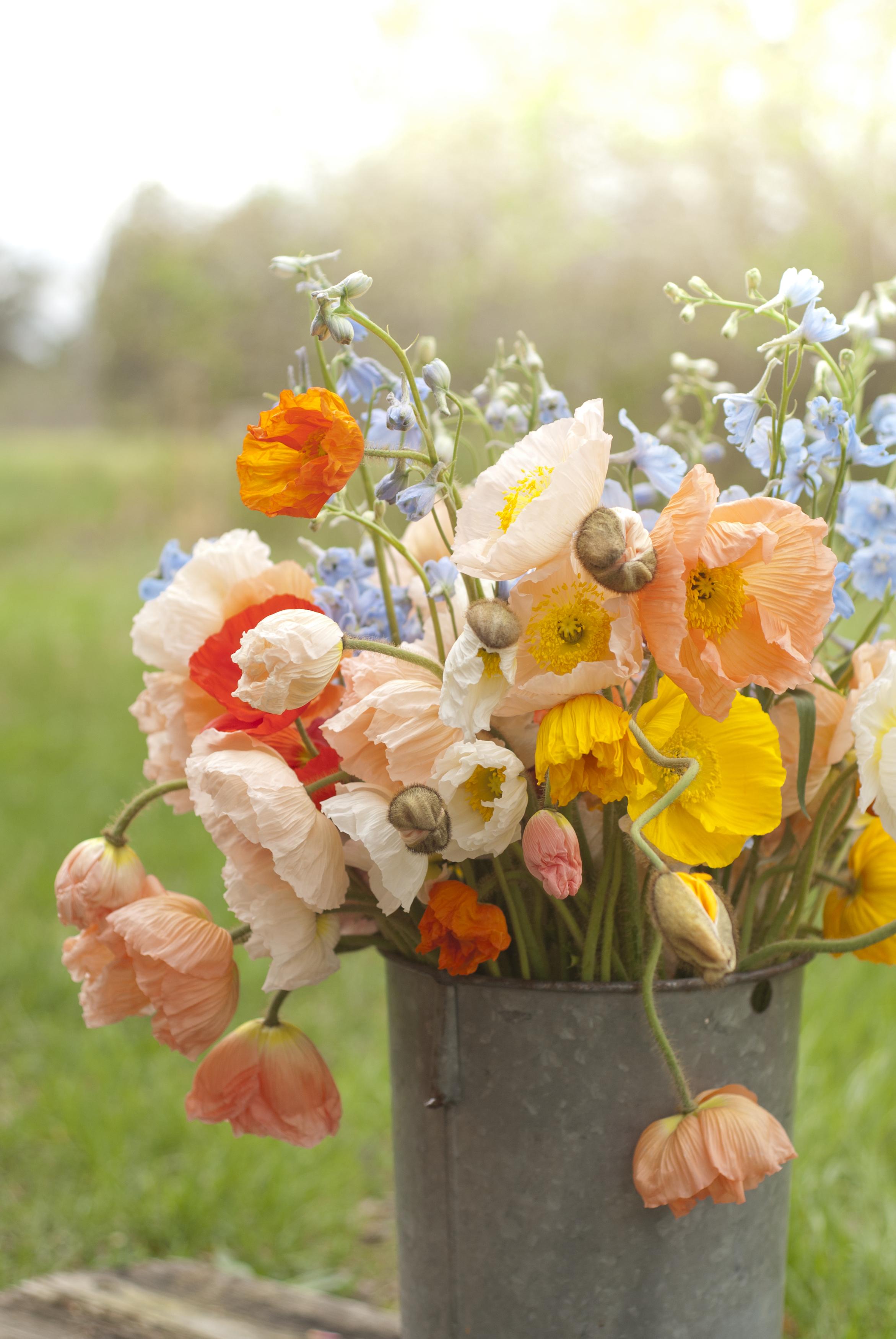 Color Fields Seasonal Organic Icelandic Poppies Weddings