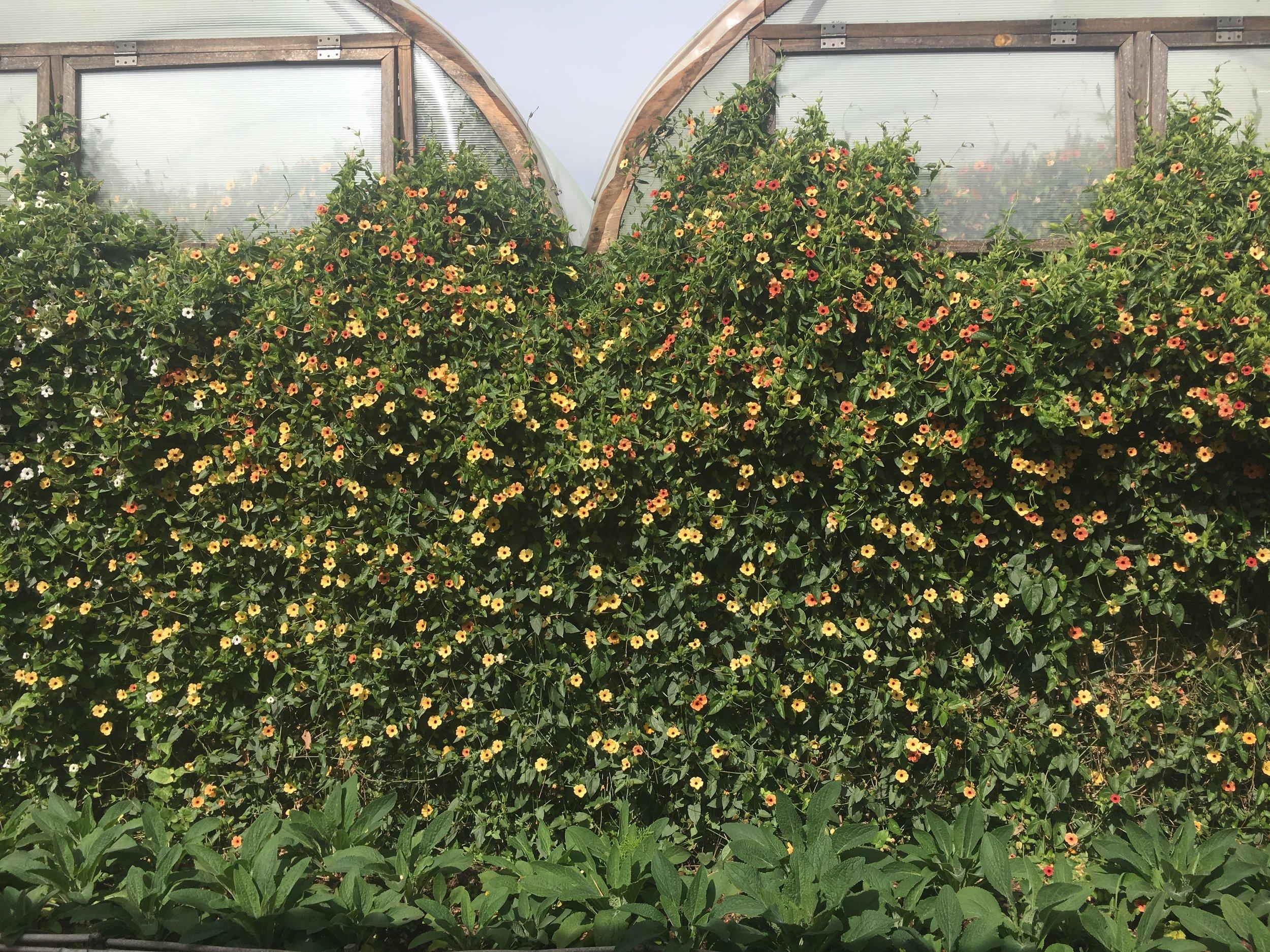 La Musa de las Flores garden.jpg