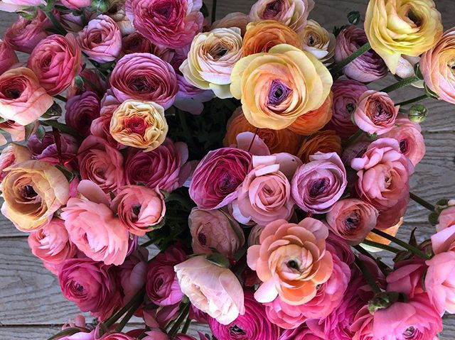 How many ranunculus pictures is too many ranunculus pictures?